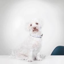 CodeFlügel Office Dog Frodo