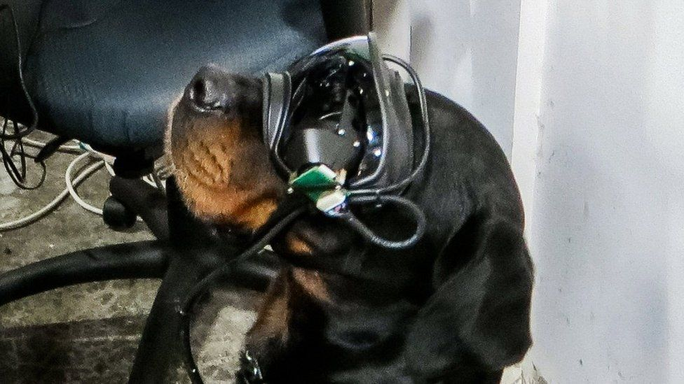 Dog with AR Glasses